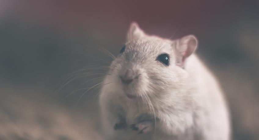 Veršovaná pohádka O Myší rodince